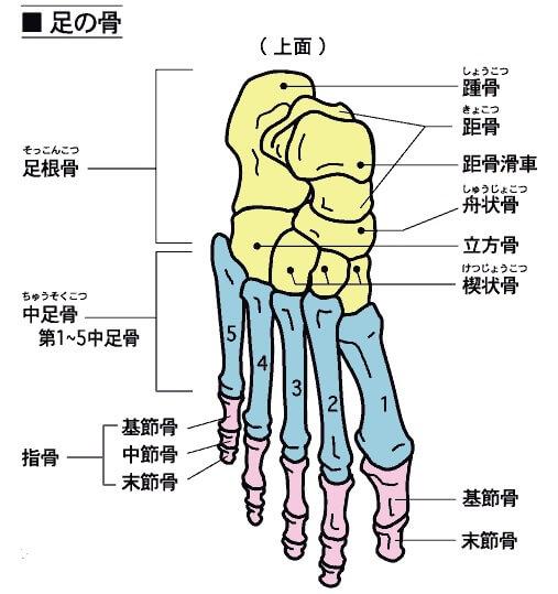 上野で美脚を目指す下半身ダイエット